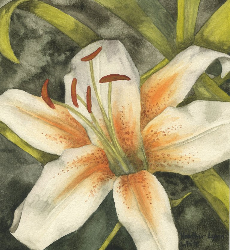 lily016